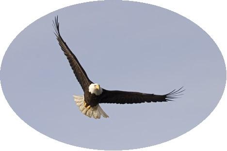 Birds-flying_mg1135