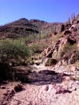 Camino de Oesta trail