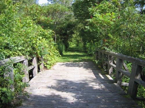 Bridge_and_trail
