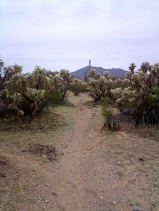 Cam boh trail 6 lush cholla cactus on Roadrunner trail