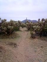 Cam boh trail 6 lush cholla cactus on Roadrunner trail