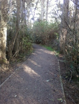 Old trail made new at end of block Ocean Drive Mckinleyville Nov 7 2012