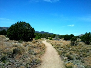 Trail with juniper trees