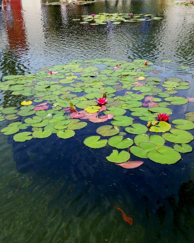 Pond photo 3